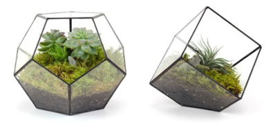 Dodecahedron and Cube Terrariums